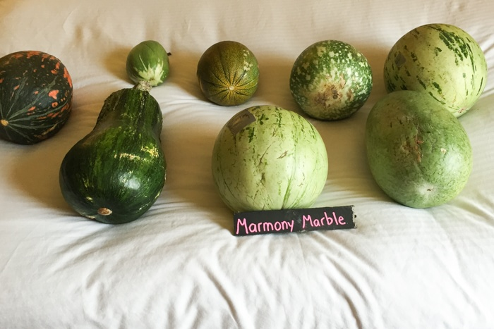 SF-Melons